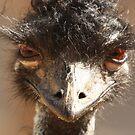 Emu by Steve Bullock