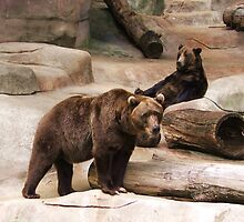 Brown and Black Bears by Reedyplace