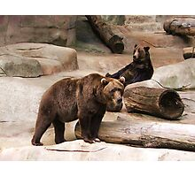 Brown and Black Bears Photographic Print