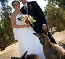 Wedding wallabies by Sue Wilson (Kane)