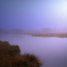 Misty Morning by ienemien