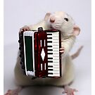 The accordeon. by Ellen van Deelen
