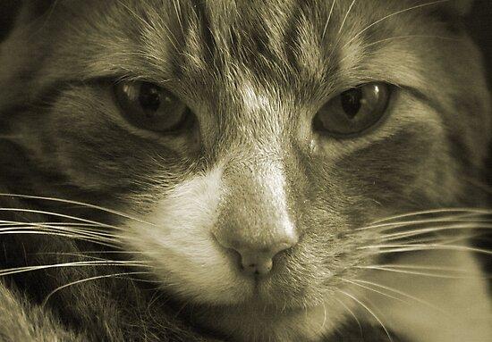 Garfield by Tasha  Blackmore