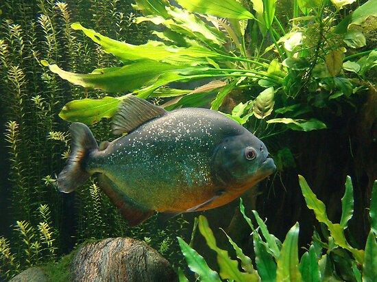 Fishy Tale by Gotcha  Photography