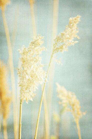 soft. by Bethany Helzer