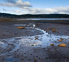 Lake King William mudflats by Anthony Davey