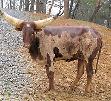 Young Watusi In The Rain by Ginny York
