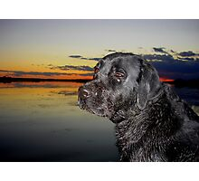 """ Boomer going home "" Photographic Print"