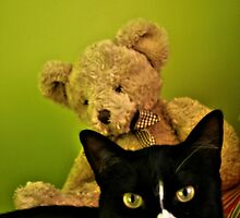 Big Teddy And Tuxedo Cat by terrebo