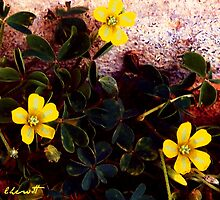 Petite Yellow Flowers by Lisa Taylor