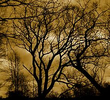 trees by Heike Nagel