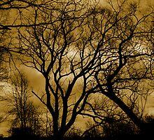 trees by Heike Nagel