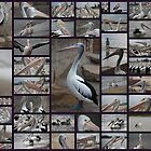 Chasing Pelicans by chasingsooz