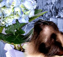 I Love Flowers!   by maxy