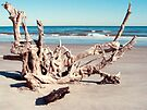 Driftwood Impressions by Mary Campbell