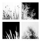 snippets. by Laura Cutmore