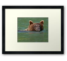 Grizzly Bear Swimming Framed Print