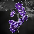 Purple Flowers by Zachary Golus