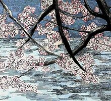 Cherry Blossoms by Barbara Weir