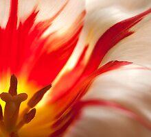 Flower of Fire by Karen Kaleta