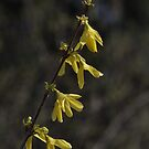 Yellow flower crop by TheKoopaBros