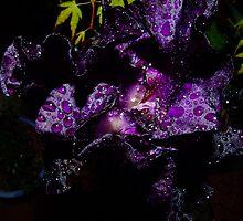 Purple heart by Julie Short