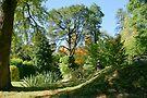 Wairoa Gardens by LeeoPhotography