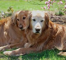 Muffin & Riley by Jeff Stroud