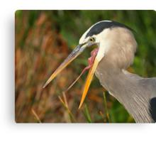 Great Blue Heron Exposure Canvas Print