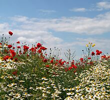 poppy field by alixlune
