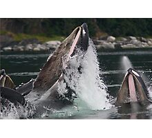 Humpback Whales Breaching Photographic Print
