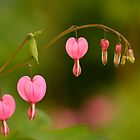 Be Still My Bleeding Hearts by Gina Ruttle  (Whalegeek)