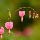 Be Still My Bleeding Hearts by Gina Ruttle  (Whalegeek)