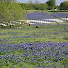 Texas Spring by mwfoster