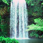 Millaa Millaa Falls - Queensland - Australia by Paul Davis