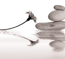 Balancing pebbles and daisy reflection by Martine Affre Eisenlohr