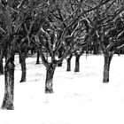Snow In Darwin by Ollieography