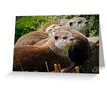Family of otters........ Greeting Card