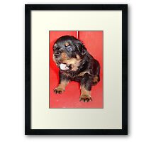 Rottweiler Guard Duty Framed Print