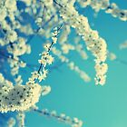 White Blossom by Marc Loret