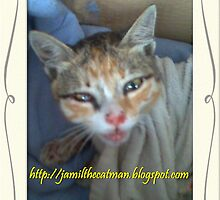 Shakitar ( read the story about this cat on my blogspot.it sad.  by jamilkucing