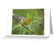 Prairie Warbler Portrait Greeting Card