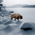 Buffalo Spirit at Newfound Lake by Wayne King