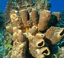 Coral Head by David LaMay