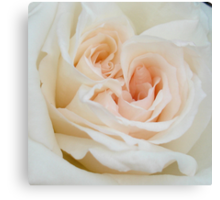 Close Up View Of A Beautiful White Rose. Canvas Print