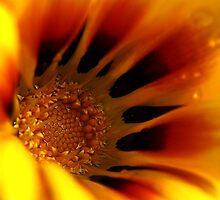 Sunshine by Lindsay Woolnough (Oram)