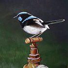 Blue Wren on Tap by Jennie Liebich