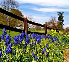 Bluebells & Daffodils  by Larissa  White Edwards