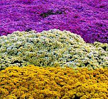 Flower carpet by Tamara Travers