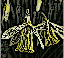 Daffodil by Adrian Matthews